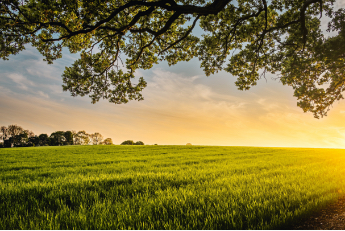 Schön am Boden bleiben: Die Bodenwertermittlung